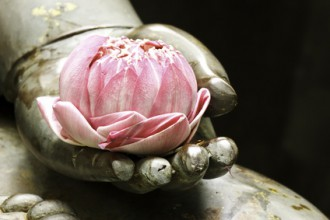 lotus in hand of buddha